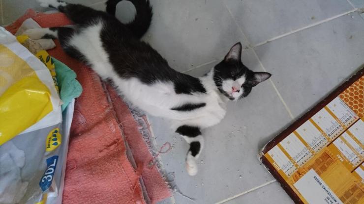 NAUTILUS - M - Né le 01/09/2016 - Adopté en décembre 2017