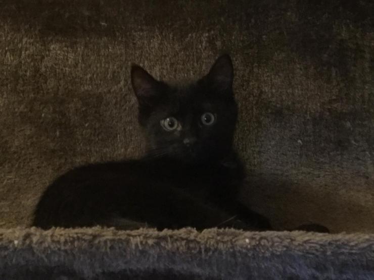 NIDOUILLET - M - Né le 05/10/2017 - Adopté en Février 2018