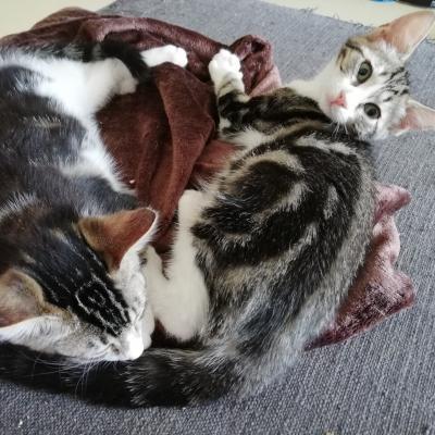 OKALY – F - Née le 01/05/2018 - FIV + <3 - Adoptée en Janvier 2019