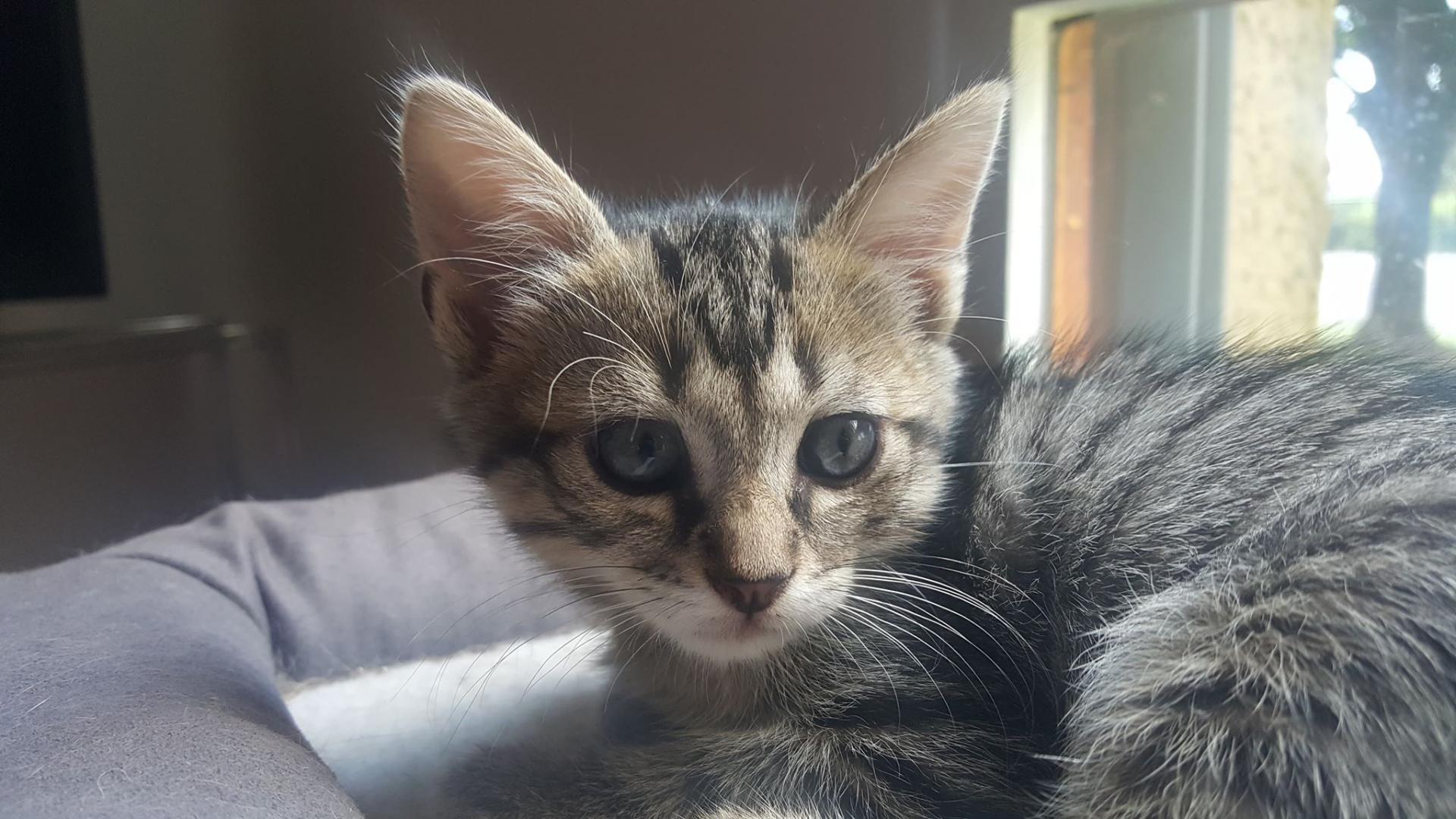 OLATHE - F - Née le 10/05/2018 - Adoptée en Aout 2018