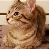 OLITA - F - Née le 01/07/2018 - Adoptée en Decembre 2018