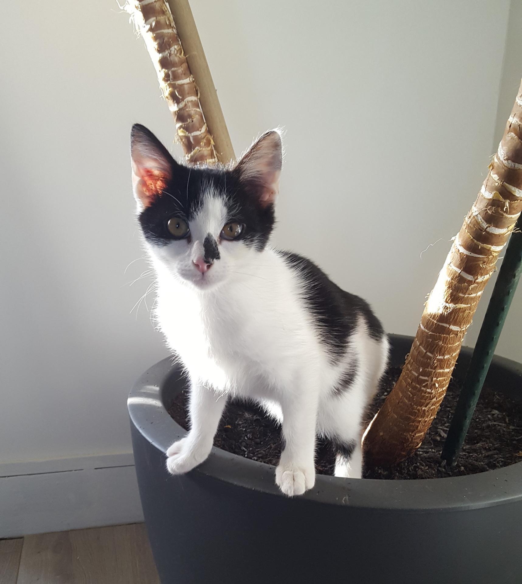 OLYA - F - Née le 10/09/2018 - Adoptée en Janvier 2019