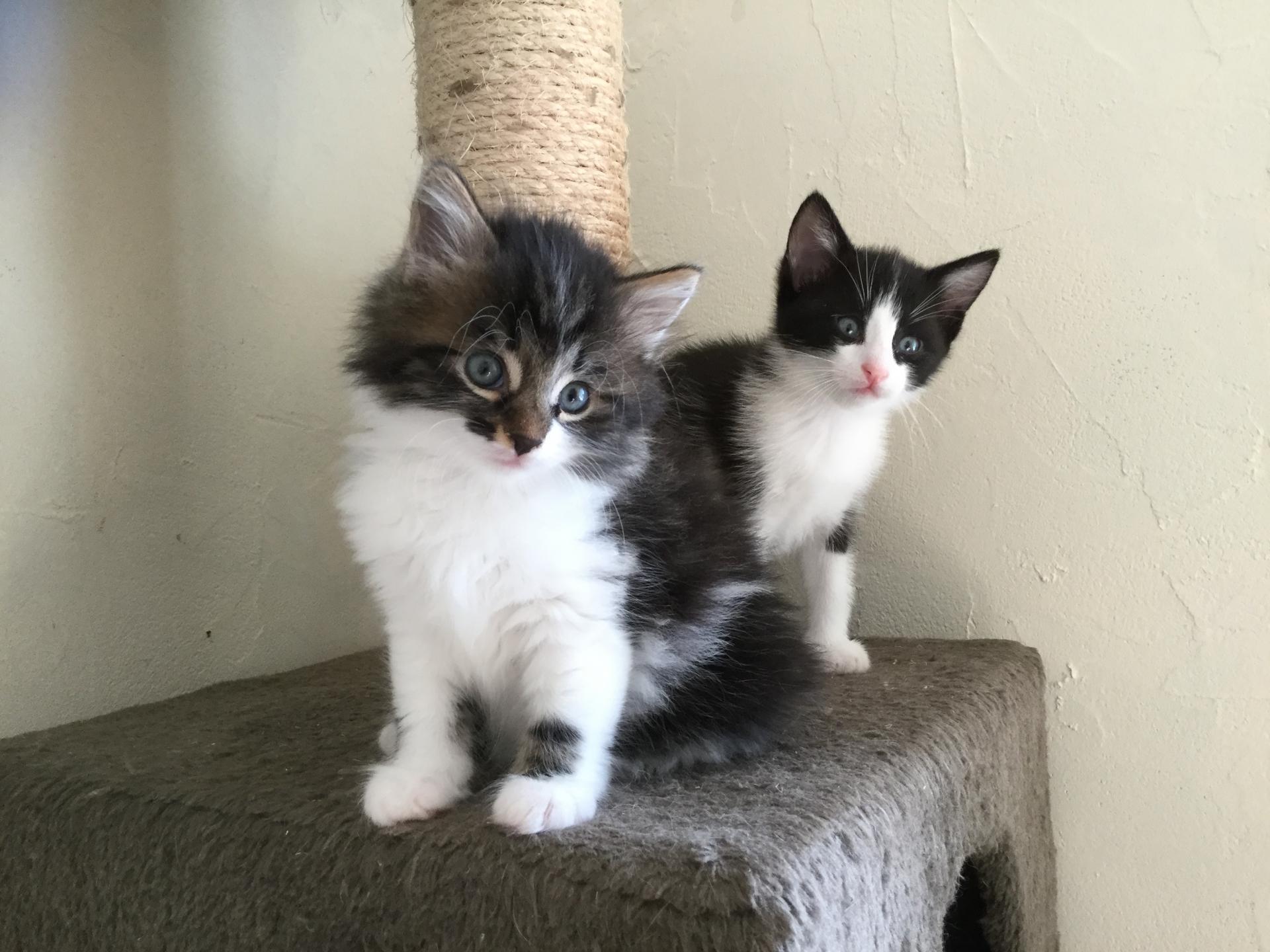 OMER - M - Née le 13/07/2018 - Adopté en Octobre 2018