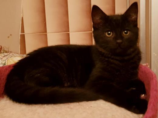O'NEEL - M - Né le 15/09/2018 - Adopté en Mars 2019