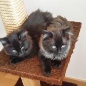 OZY et OGGY - M - Né le 05/08/2018 - Adoptés en Novembre 2018