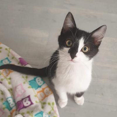 RONALDO - M - Né le 01/09/2020 - Adopté en février 2021