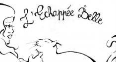 Sauvetages et adoptions de chats